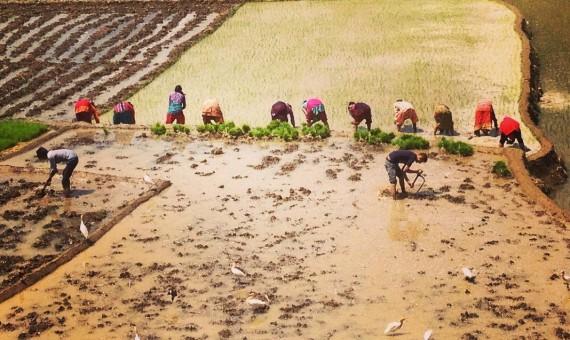 The Muddy Mayhem of Ropain
